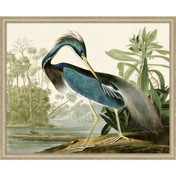 Audubons Blue Heron