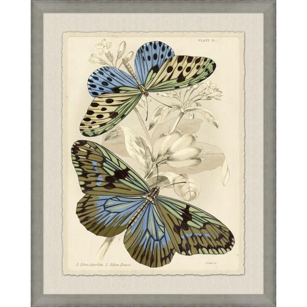 Naturalist Library Papillion 1